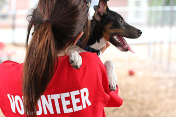 Volunteering with Anilmals and Dogs